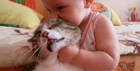 نگهداری گربه در منزل